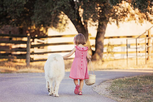 Back view of little girl walking beside big white dog on country road - XCF00224