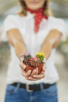 Woman's hands holding cacti in plant nursery - DLTSF00170