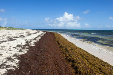 Seaweeds at beach against blue sky during sunny day, Grand Turk, Turks And Caicos Islands - RUNF03232