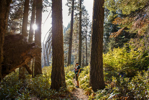 Father and baby in a carrier in the forest at sunset, Sequoia National Park, California, USA - GEMF03161