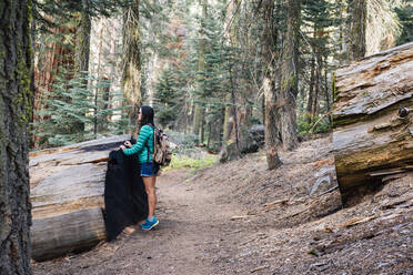 Woman with backpack hiking among the giant trees in the forest in Sequoia National Park, California, USA - GEMF03166