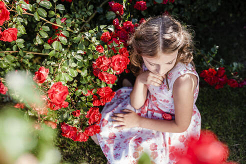 Girl sitting beside red rosebush on a meadow - STBF00416