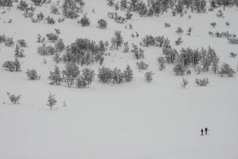 Winter landscape - JOHF01479