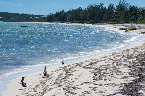 Pelicans at beach against sky during sunny day, Providenciales, Turks And Caicos Islands - RUNF03335