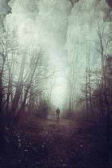 Rear view of a man on forest path - DWIF01035
