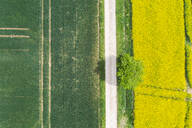 Germany, Bavaria, Regensburg, Aerial view of empty country road along rapeseed field in summer - MMAF01135