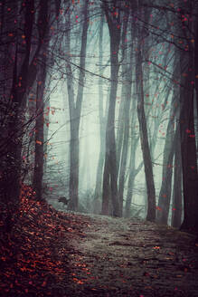 Germany, Wuppertal, scenic view of foggy forest - DWIF01042