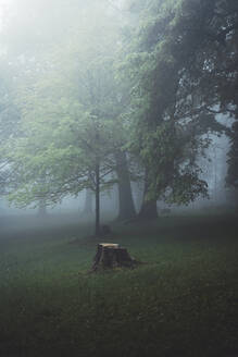 Germany, Wuppertal, scenic view of foggy forest - DWIF01051