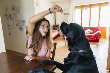 Girl playing with dog at table at home - MGIF00699