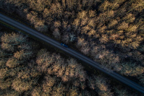 Aerial view of a straight road in the forest of Norrby on Vormsi Island in Estonia - AAEF04028