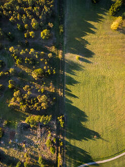 Aerial view of trees creating long shadows in the countryside, Australia. - AAEF04397
