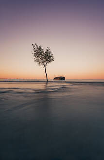 Long exposure of lone tree and a rock in the water on Lake Ontario. - CAVF63377