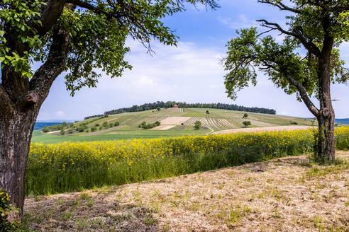 Germany, Bavaria, Baden-Wuerttemberg, scenic view of field - EGBF00342