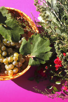Close up of young grapes in bowl - JTF01374