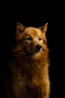 Dog, studio shot - JOHF02229