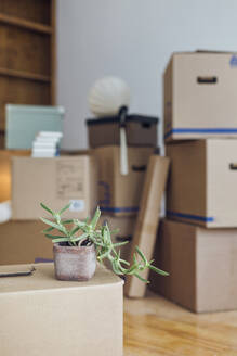 Potted plant on cardboard box in an empty room in a new home - MAMF00808