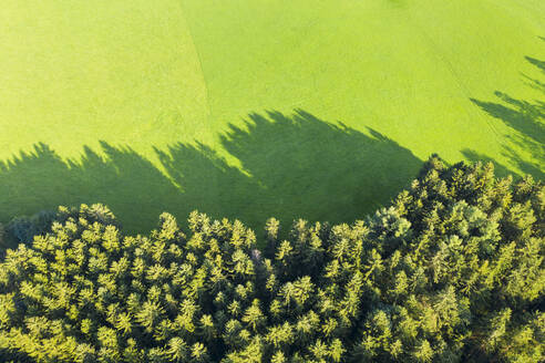Germany, Bavaria, Eurasburg, Aerial view of edge of green spruce forest - SIEF09137