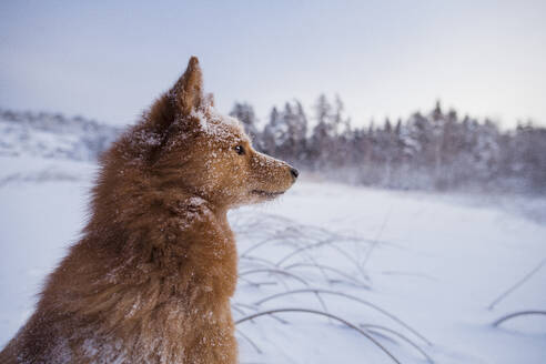 Dog looking away - JOHF02822