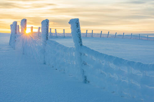 Wooden fence at winter - JOHF03062
