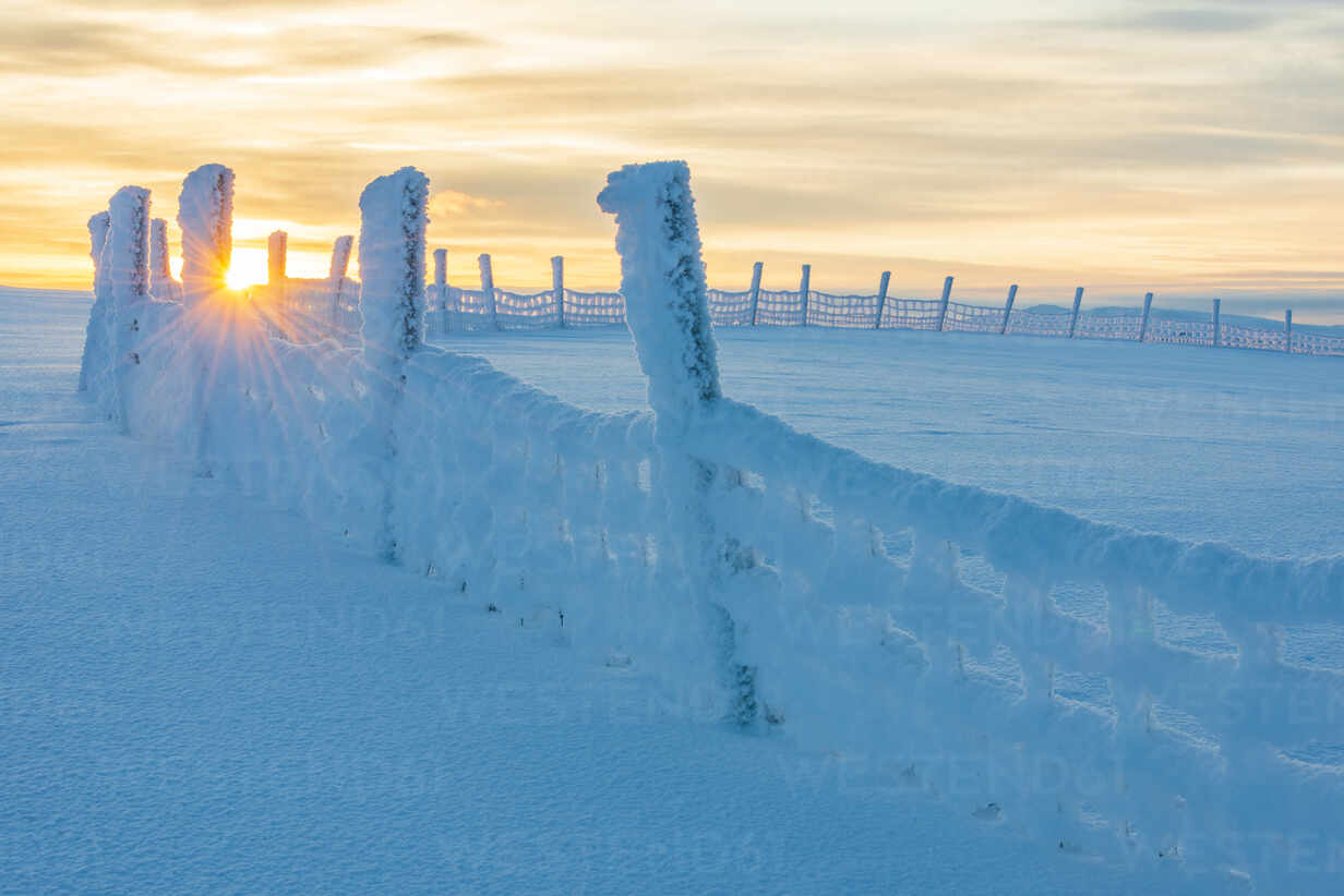 Wooden fence at winter - JOHF03062 - Johner Images/Westend61