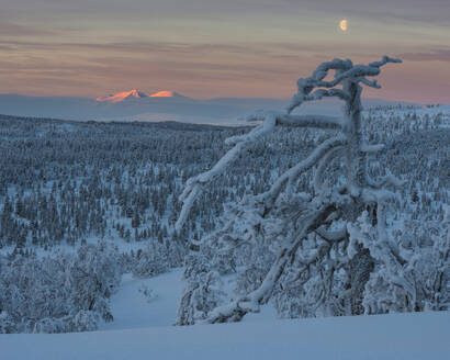 Winter landscape - JOHF03080