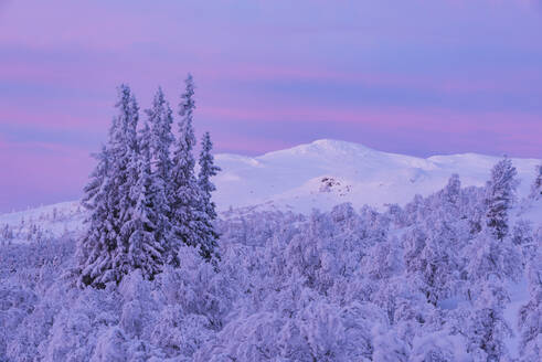 Winter landscape at sunset - JOHF03083