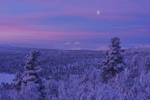 Winter landscape at sunset - JOHF03089