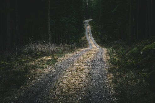 Dirt road in forest - JOHF03188