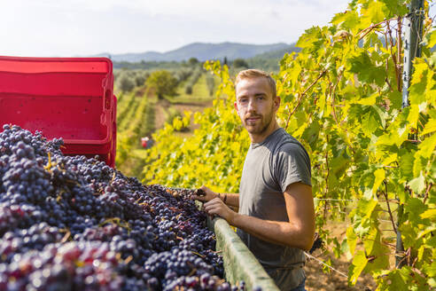 Portrait of young man at trailer with harvested grapes in vineyard - MGIF00794