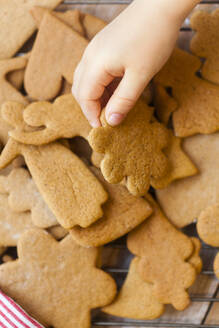 Kids hand holding gingerbread cookie - JOHF03695