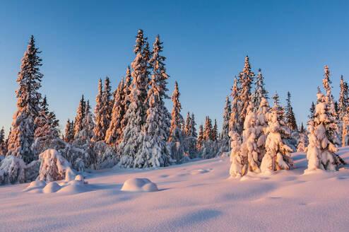 Trees at winter - JOHF04145
