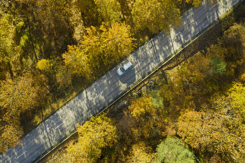 Aerial view of road through forest - JOHF04220