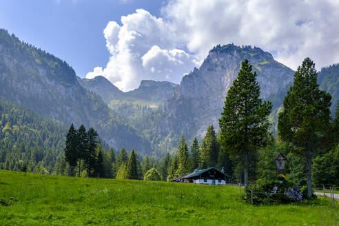 Hintere Längentalalm, Längental, im Hintergrund Benediktenwand, bei Arzbach, Isarwinkel, Oberbayern, Bayern, Deutschland - LBF02739