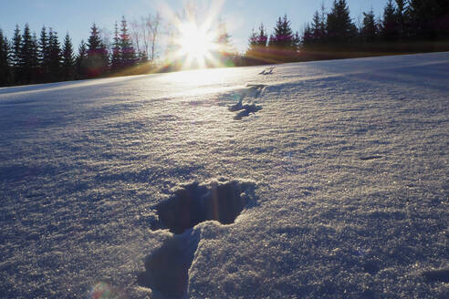 Germany, Bavaria, Sun setting over hare tracks in thick snow - HUSF00082