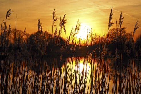 Germany, Bavaria, Silhouettes of reeds growing in pond at sunset - HUSF00097