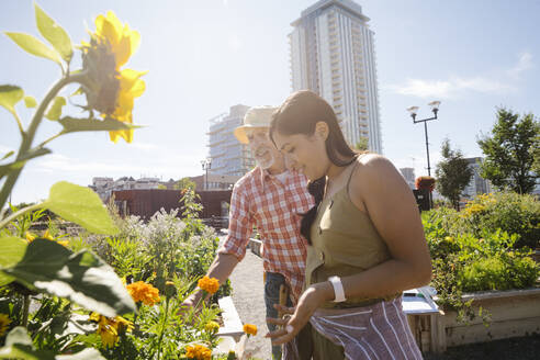 Man and woman tending to flowers in sunny, urban community garden - HEROF39382