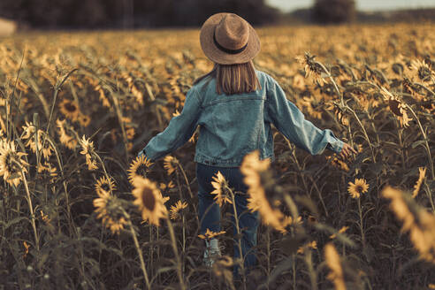 Rear view of young woman with hat and jeans jacket in a sunflowers field at sunset in Lleida - OCAF00427