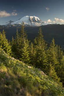 View of Mount Rainier, Washington State, United States of America, North America - RHPLF12471