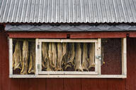 Hanging dried fish, Sandvika, Senja, Norway, Scandinavia, Europe - RHPLF12522