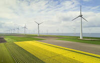 Windfarms both on and offshore, blossoming bulb fields in polder, Urk, Flevoland, Netherlands - CUF52603
