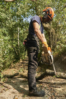 Male tree surgeon on woodland path sawing tree branch using chainsaw, low angle view - CUF52612