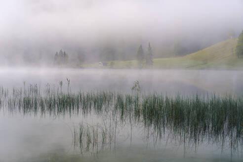 Nebel am Ferchensee, bei Mittenwald, Werdenfelser Land, Wettersteingebirge, Oberbayern, Bayern, Deutschland - SIEF09229