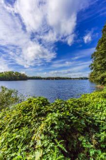 Germany, North Rhine-Westphalia, Dusseldorf, Unterbach, Landscape with lake - THAF02624