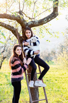 Girl and her sister holding a cute golden retriever puppy on tree ladder in sunlit orchard, portrait, Scandicci, Tuscany, Italy - CUF52973