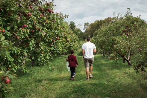 Father and son walking through an apple orchard in the fall together. - CAVF66950