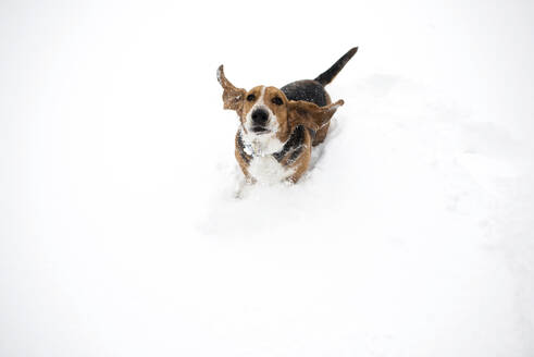 High angle portrait of dog playing in snow covered field - CAVF67166