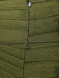 Aerial view of rice fields - CAVF67621