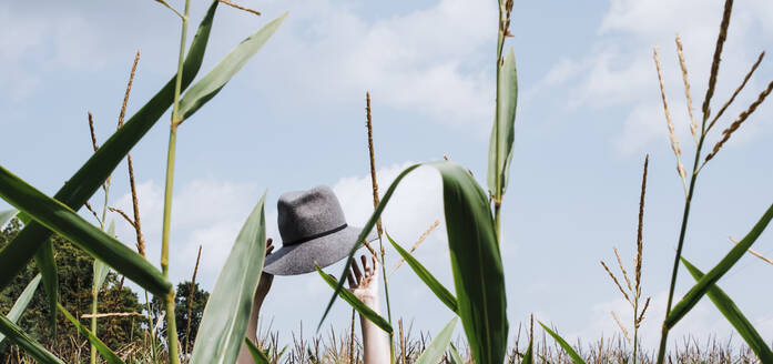 Cropped hands of woman holding hat at cornfield against sky - CAVF67696