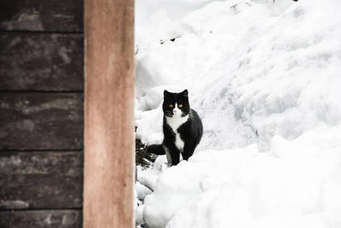 Portrait of tuxedo cat on snow covered field - CAVF68146
