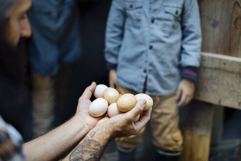 Father with two kids collecting eggs at chicken coop on an organic farm - SODF00298